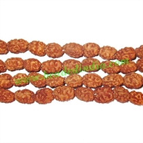 Rudraksha Beads 2 Mukhi (two face), size: 5mm thickness