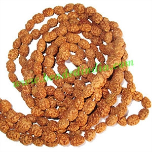Rudraksha Beads String (mala) 2 Mukhi (two face), size: 6mm thickness