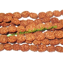 Rudraksha Beads 2 Mukhi (two face), size: 7mm thickness