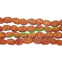 Rudraksha Beads 2 Mukhi (two face), size: 9mm thickness