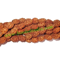 Rudraksha Beads 2 Mukhi (two face), size: 10mm thickness