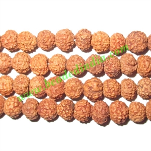 Rudraksha Beads 6 Mukhi (six face), size: 5mm