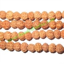 Rudraksha Beads 7 Mukhi (seven face), size: 5mm