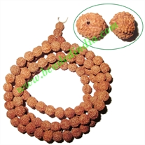 Rudraksha Beads String (mala) 8 Mukhi (eight face), size: 10mm
