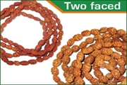 rudraksha two faced (2 mukhi) beads mala