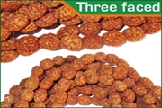 rudraksha three faced (3 mukhi) beads mala