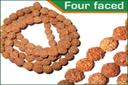 rudraksha four faced (4 mukhi) beads mala