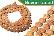 rudraksha seven faced (7 mukhi) beads mala