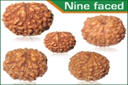 rudraksha nine faced (9 mukhi) beads mala